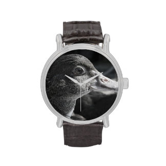 animal del campo mojado principal del pájaro del reloj de mano