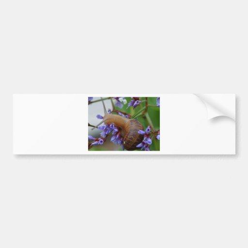 Animal del caracol etiqueta de parachoque
