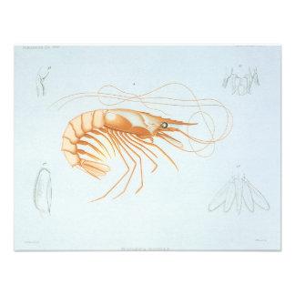 Animal del océano de la vida marina del vintage A Invitación Personalizada