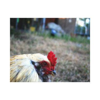 animal del pájaro de las aves de corral de la gran impresiones en lienzo estiradas