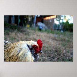 animal del pájaro de las aves de corral de la gran impresiones
