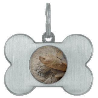 animal del reptil de la tortuga de las Islas Placa De Nombre De Mascota