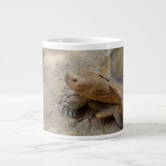 animal del reptil de la tortuga de las Islas Taza Grande