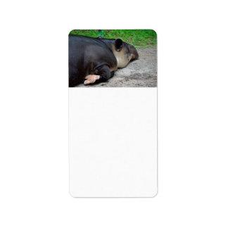 animal del tapir el dormir del critter trasero del etiqueta de dirección