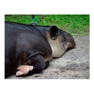 animal del tapir el dormir del critter trasero del postales