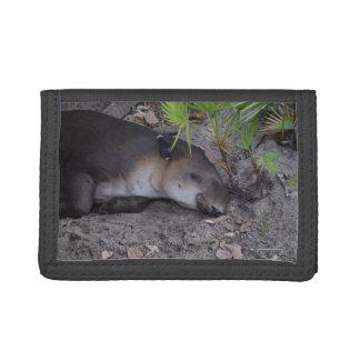 animal dormido sano del tapir