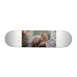 Animal dulce tablas de skate