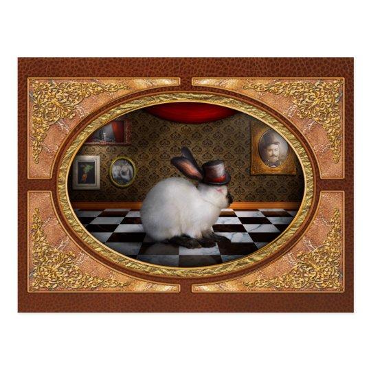 Animal - el conejo postales
