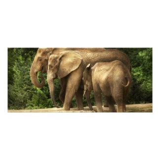 Animal - elefante - familia muy unida tarjeta publicitaria a todo color