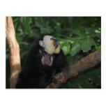 Animal en el parque zoológico tarjetas postales