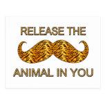 Animal en usted bigote de la raya del tigre tarjetas postales