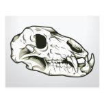 Animal esquelético del mamífero de los cráneos del tarjetas postales