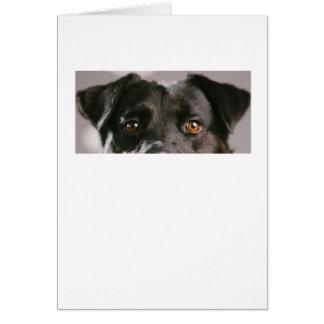 Animal Eyes Series - Dog 1 Card