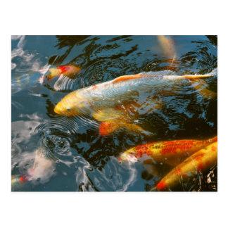 Animal - Fish - Bestow good fortune Postcard