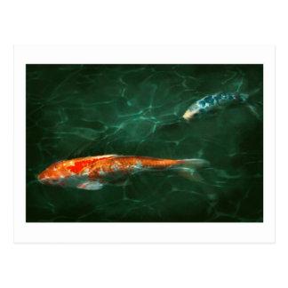 Animal - Fish - Koi - Another fish story Postcard