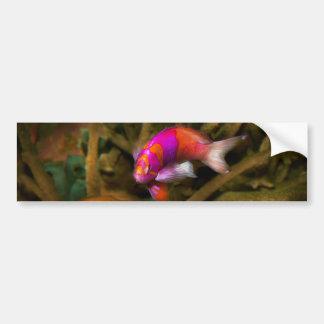 Animal - Fish - Pseudanthias pleurotaenia Bumper Sticker