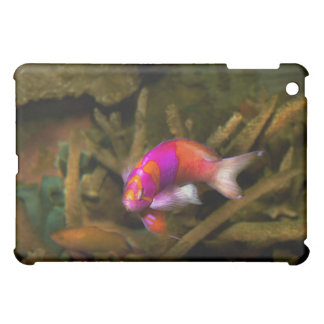 Animal - Fish - Pseudanthias pleurotaenia Cover For The iPad Mini