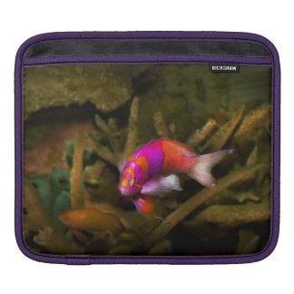 Animal - Fish - Pseudanthias pleurotaenia iPad Sleeves