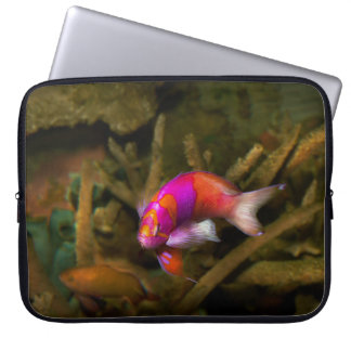 Animal - Fish - Pseudanthias pleurotaenia Laptop Computer Sleeve