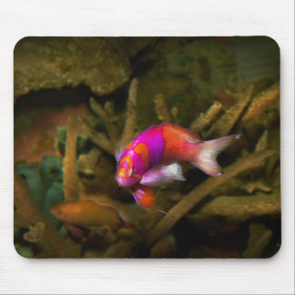 Animal - Fish - Pseudanthias pleurotaenia Mouse Pad