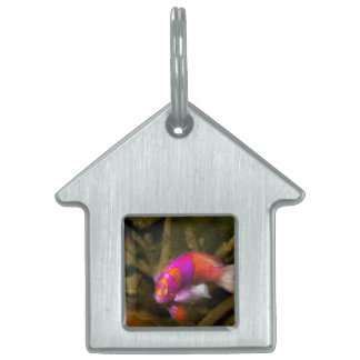 Animal - Fish - Pseudanthias pleurotaenia Pet Tag