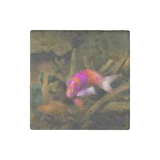 Animal - Fish - Pseudanthias pleurotaenia Stone Magnet