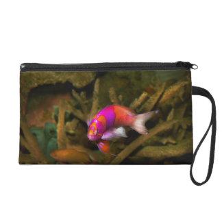 Animal - Fish - Pseudanthias pleurotaenia Wristlet Purse