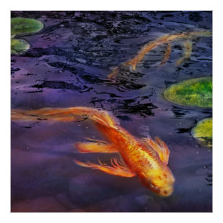 Animal - Fish - There's something about koi Posters