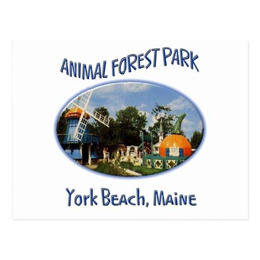 Animal Forest Park Postcard