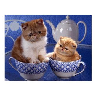 animal friendship postcards