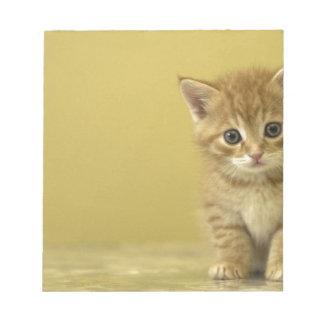 Animal - gatito curioso del bebé bloc de papel