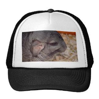 animal gris de la opinión de cabeza lateral de la gorras de camionero