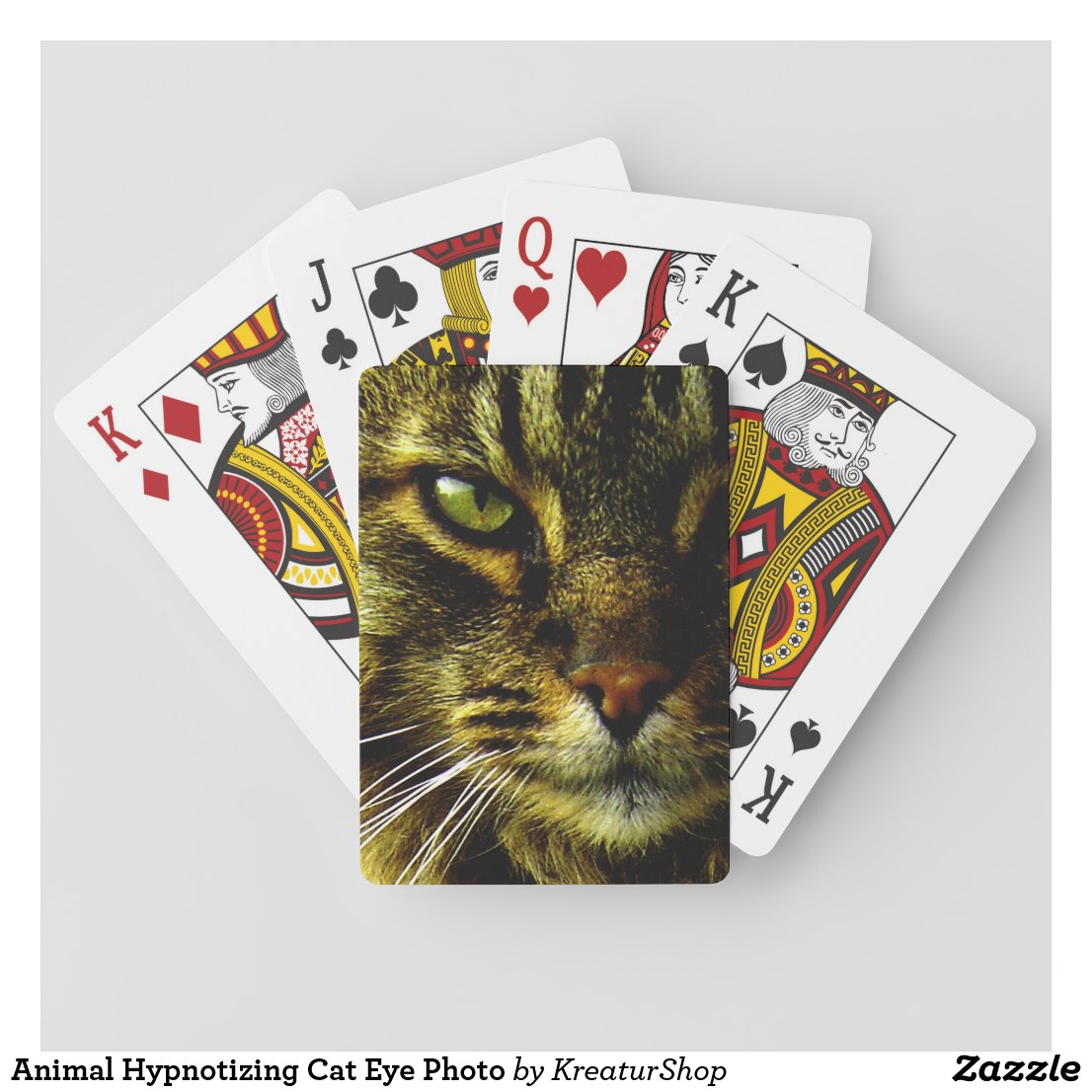 Animal Hypnotizing Cat Eye Photo