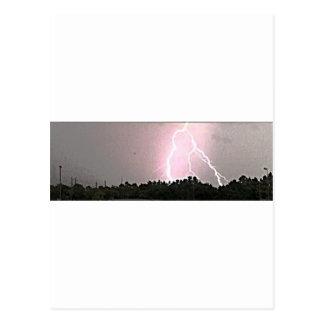 Animal Kingdom Lightning Postcard