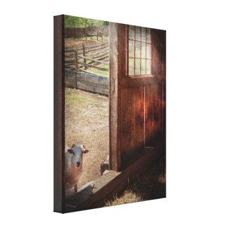 Animal - Lamb - Hello anybody home Canvas Print
