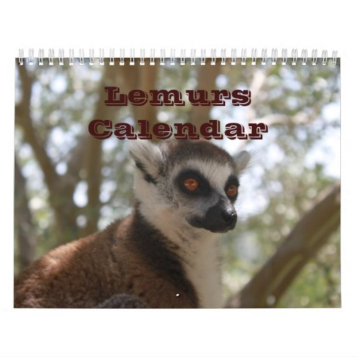 Animal Lemur Cute Nature Zoo Custom Destiny Wall Calendars