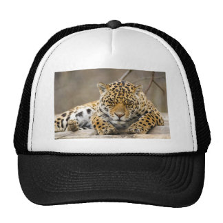 Animal Leopard Pattern Peace Love Nature Destiny Hat