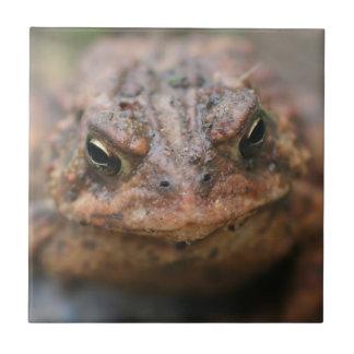 Animal lindo de la cara del sapo azulejo cuadrado pequeño
