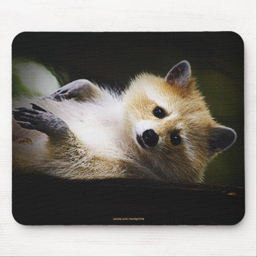 Animal lindo de la fauna rubia blanca del mapache tapetes de raton