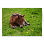 """Animal lover foal """"Thinking of You"""""""