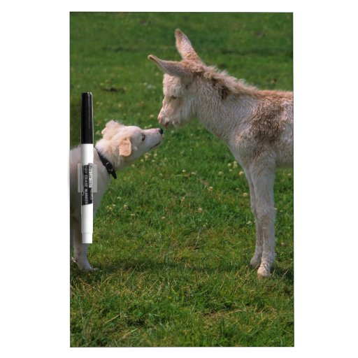 Animal lover shank, young donkey with dog, Dry-Erase board