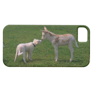 Animal lover shank, young donkey with dog, iPhone SE/5/5s case