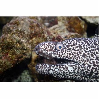 animal manchado del acuario del derecho de la angu fotoescultura vertical