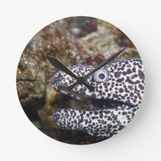 animal manchado del acuario del derecho de la angu reloj redondo mediano