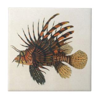 Animal marino de la vida del océano del vintage L