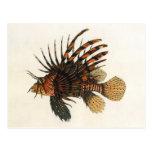 Animal marino de la vida del océano del vintage, postal