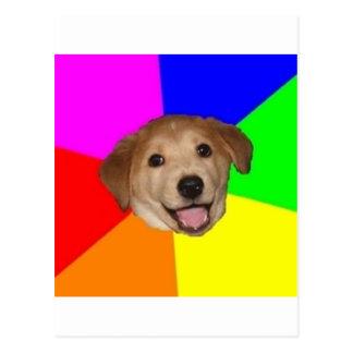 Animal Meme del consejo del perro del consejo Postales