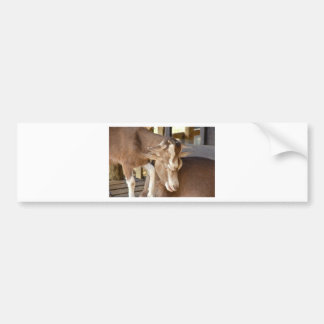 Animal Mother and Baby Goat Bumper Sticker