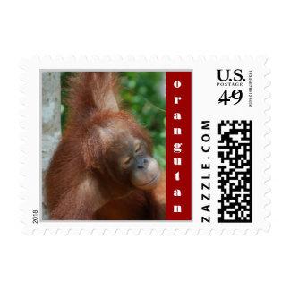 Animal Movie Star Postage Stamp