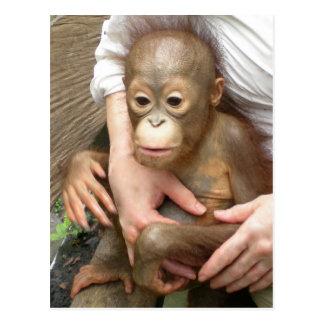 Animal Orphans Postcards
